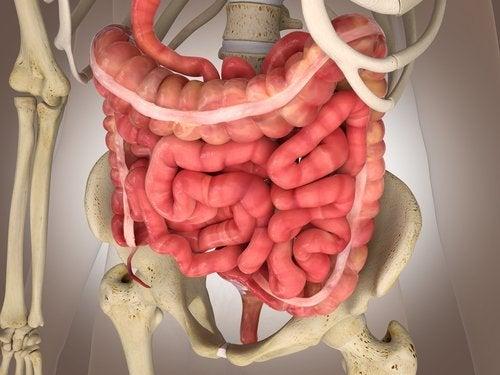 Intestino in 3D