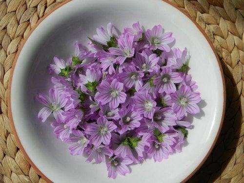 fiori di malva in un piatto