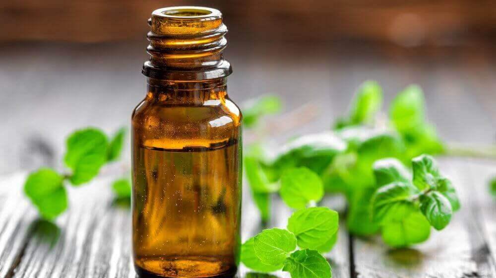 Olio di menta, i benefici per il corpo