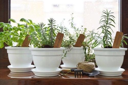 piante aromatiche nei vasi