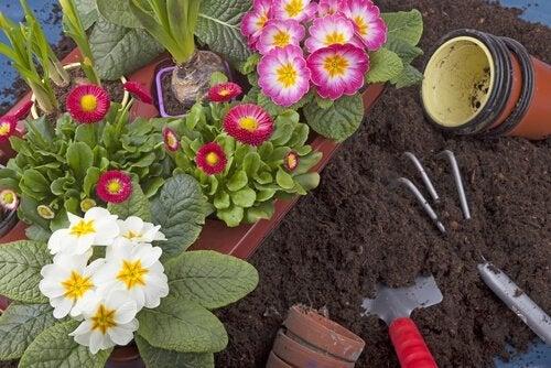 10 piante da coltivare facilmente nel vostro giardino