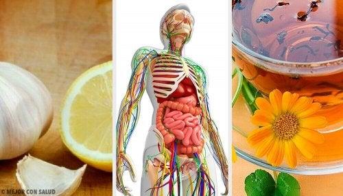 Depurare il sistema linfatico con rimedi naturali