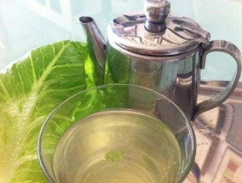 Tè di lattuga