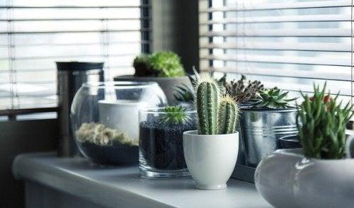 5 idee per piantare diversamente i cactus