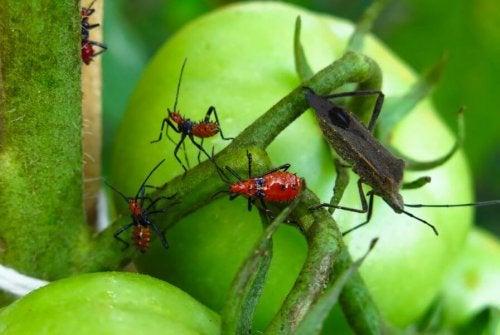 5 veleni naturali per sterminare i parassiti