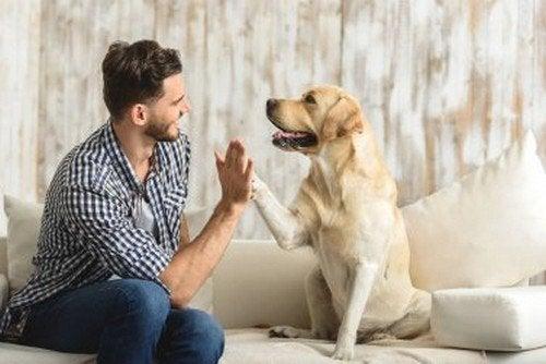 I benefici di avere un animale in casa