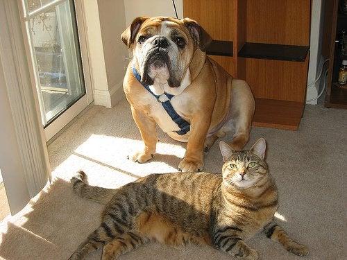 Cane e gatto in casa