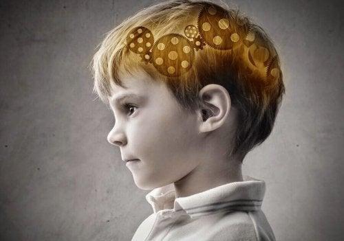 Cervello di un bambino