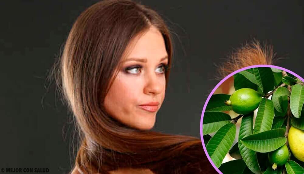 Foglie di guava per capelli maltrattati