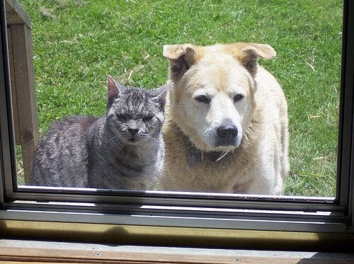 Gatto e cane fuori dalla finestra