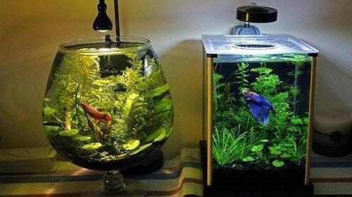 Il modo migliore per pulire l'acquario
