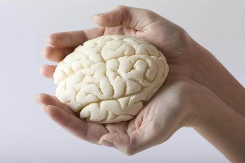 Gli esercizi più efficaci per migliorare la memoria