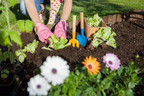 Aceto in giardino: 7 fantastici usi