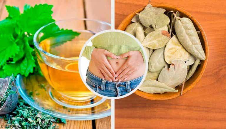 Problemi digestivi: 5 piante medicinali
