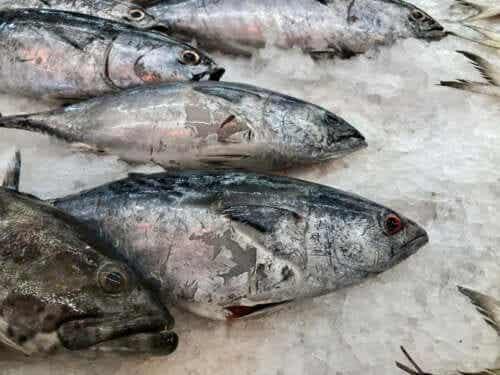 Come capire se il pesce è fresco?
