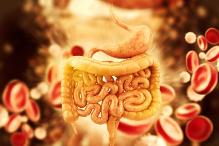 Disintossicare il colon con 5 infusi