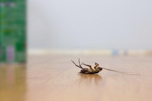 5 trucchi per allontanare gli scarafaggi senza insetticidi