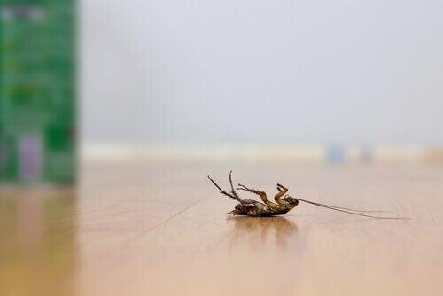 Allontanare gli scarafaggi senza insetticidi