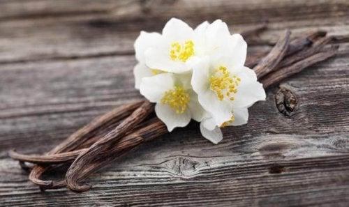 eliminare odore di muffa con la vaniglia