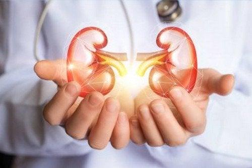 Disintossicare i reni: alimenti sì e no