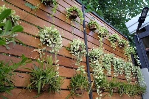 Idee Per Arredare Il Giardino : Giardino verticale fantastiche idee per arredare casa vivere