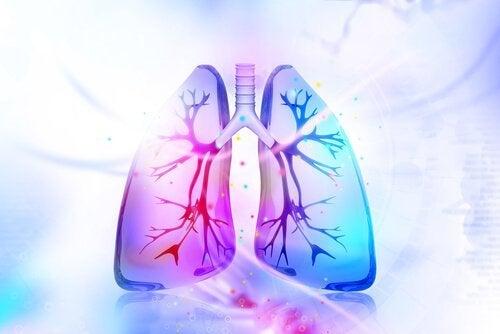Disintossicare i polmoni con rimedi naturali