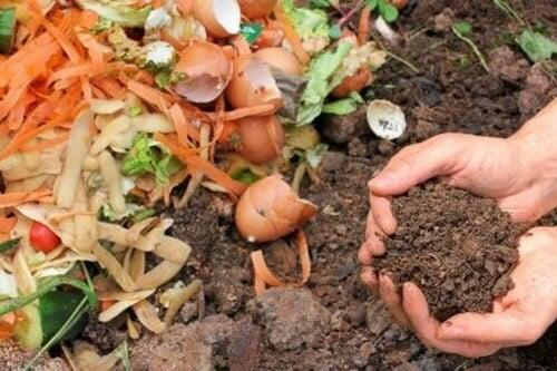 Concime biologico per le piante: come prepararlo