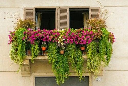 Mini giardini urbani per decorare il balcone