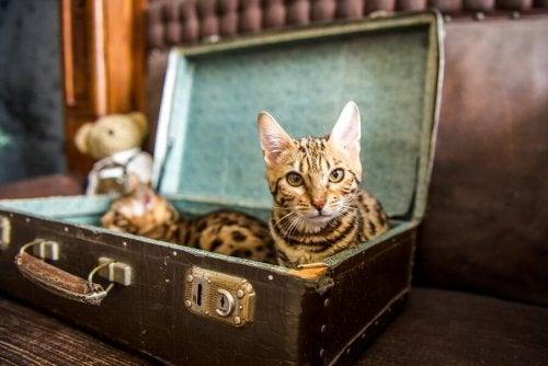Vecchie valigie per creare cucce fai-da-te per i gatti