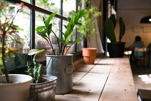 Effetti benefici delle piante da appartamento
