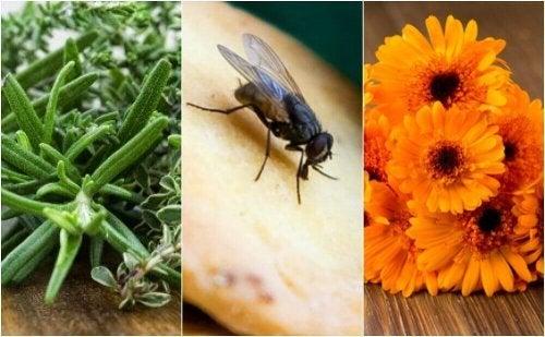 Allontanare le mosche con 6 rimedi naturali