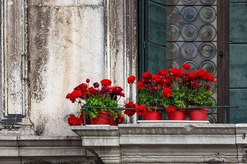 Tipi di fiori adatti a un giardino sul balcone