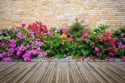 Aiuola di fiori