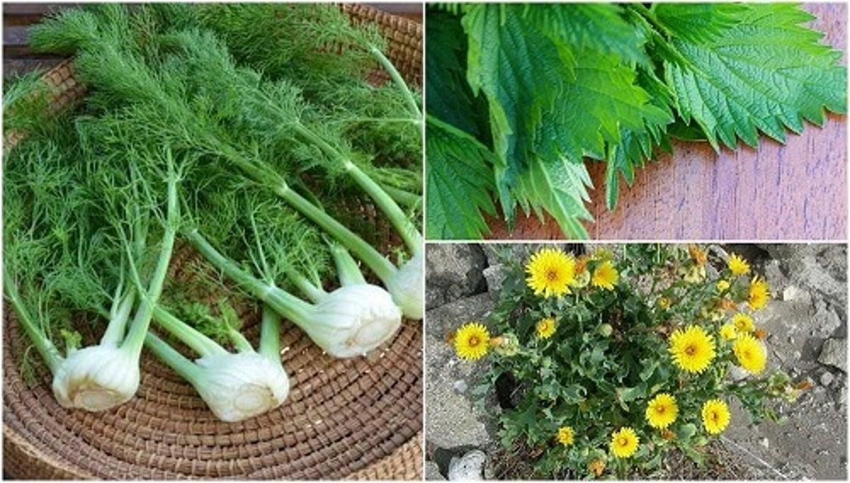Fiori E Piante Commestibili piante commestibili da conoscere - vivere più sani