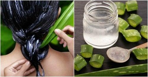 Aloe vera per idratare i capelli