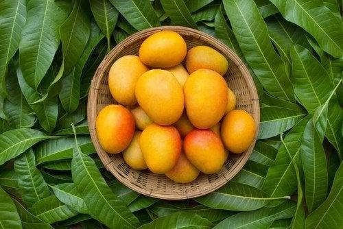 Benefici del mango in caso di stitichezza