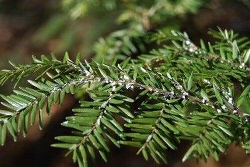 Eliminare le mosche bianche dalle piante per interni