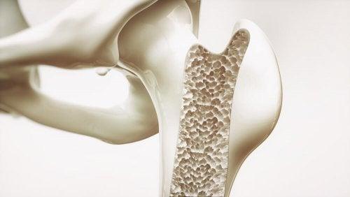 Immagine in sezione delle ossa