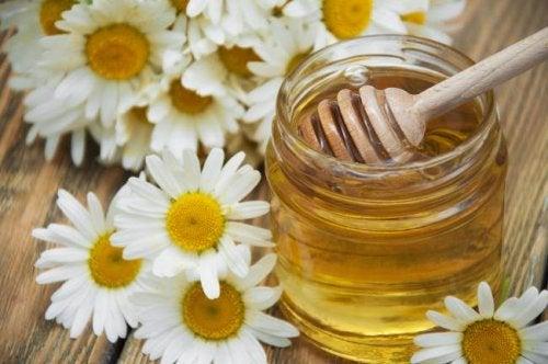 Fiori di camomilla con vasetto di miele