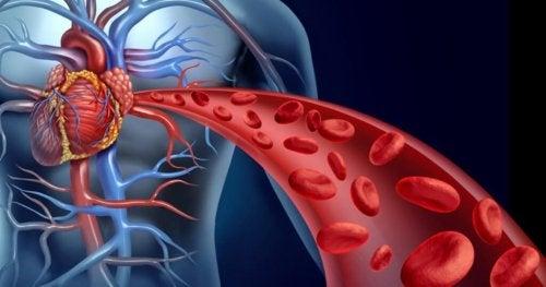 Schema della circolazione del sangue