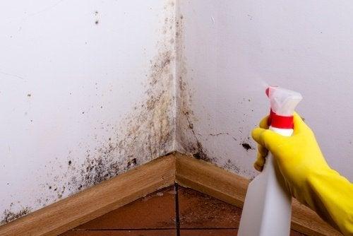 Mano spruzza un detergente contro la muffa sul soffitto del bagno