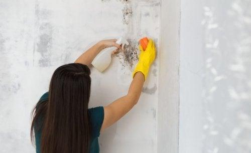 Donna pulisce una macchia di muffa sulla parete