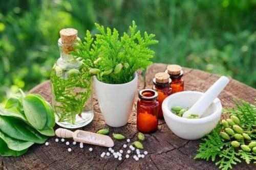 gastrite erosival da dieta di piante medicinali
