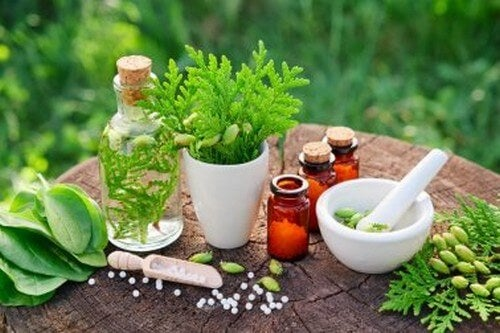 Curare il mal di stomaco con erbe medicinali