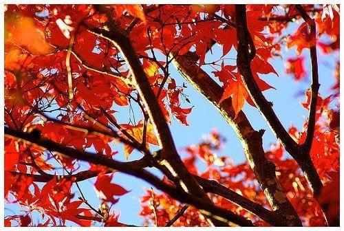 Foglie arancioni in autunno