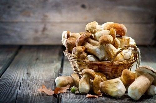 I migliori funghi medicinali secondo la scienza