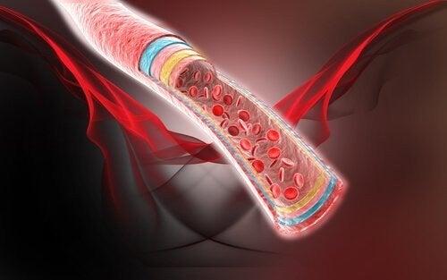 Cattiva circolazione sanguigna e rimedi naturali