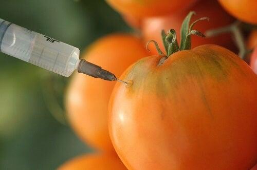 Siringa che penetra nella pelle di pomodoro