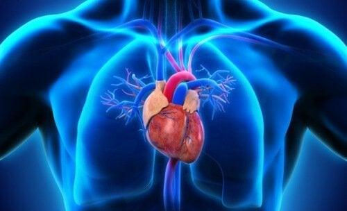 Cuore e polmoni