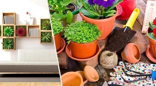 Decorare la casa con le piante: 10 idee originali
